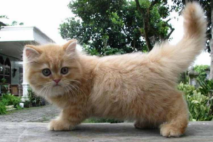 Cara Mengobati Kucing Jamuran Secara Efektif