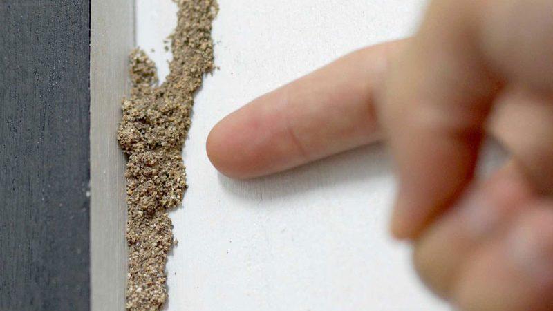 Tips Sederhana Membasmi Rayap pada Rumah